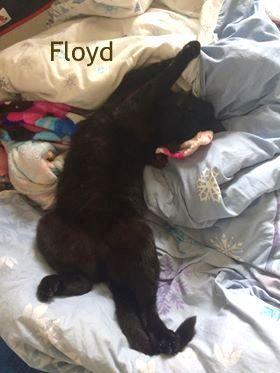 Floyd dort