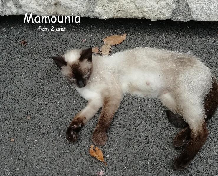 Mamounia