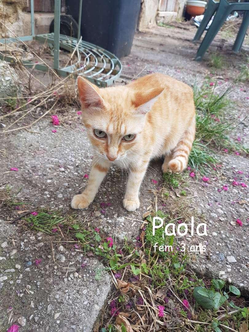 Paola 1 1