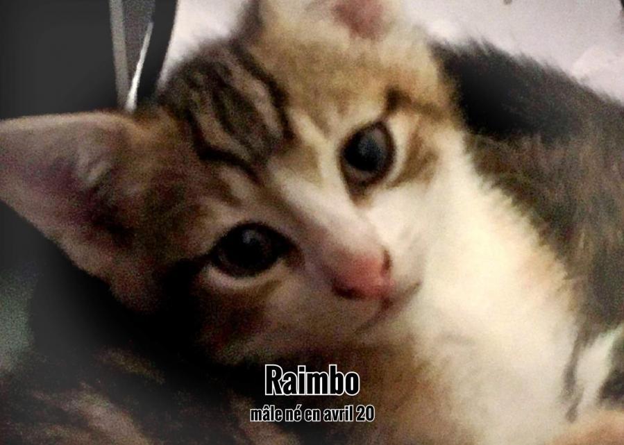 Raimbo 5