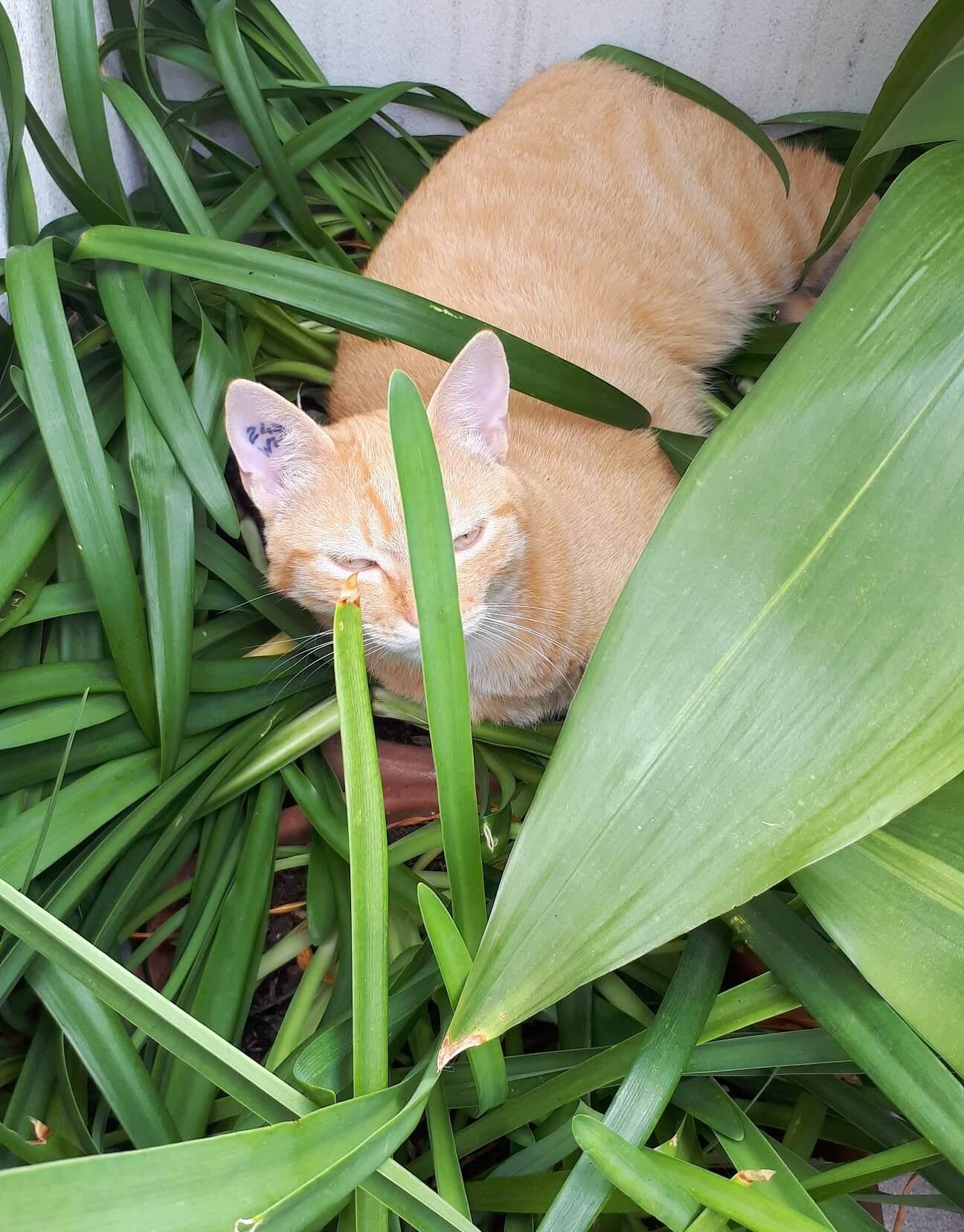 Sieste sur les plantes