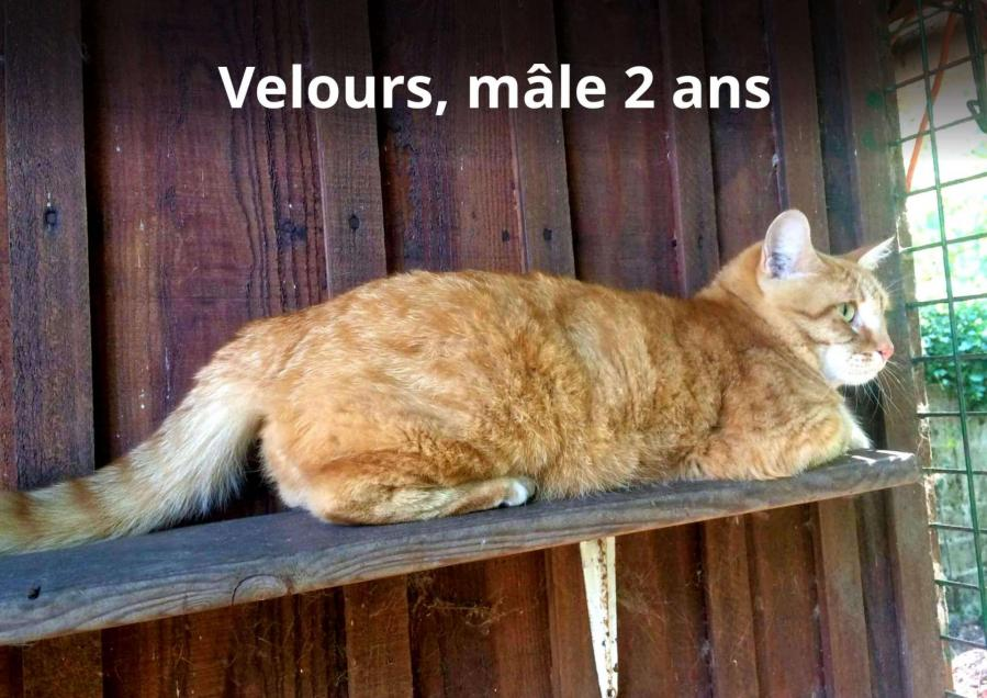 Velours 5