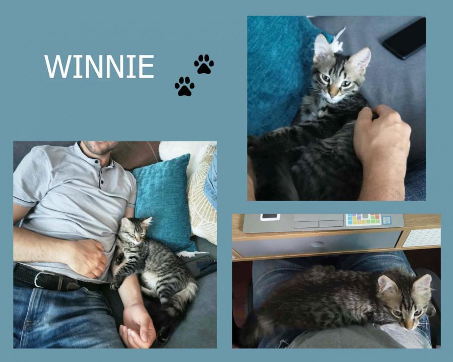 Winnie 1